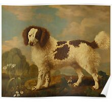 George Stubbs - Brown and White Norfolk or Water Spaniel 1778 Poster