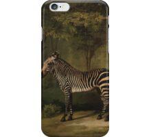 George Stubbs - Zebra 1763 iPhone Case/Skin