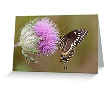 Butterfly & Thistle Flower Greeting Card