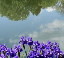Irises at the Lake     ^ Sticker