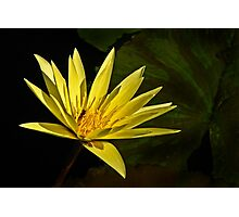 Yellow Waterlily with leaf Photographic Print