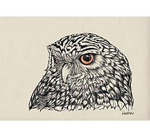 Midnight Little Owl Photographic Print