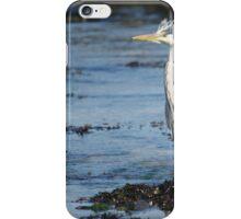 Scruffy Heron iPhone Case/Skin