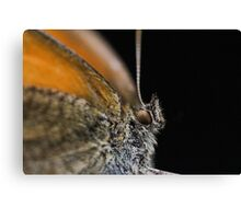 Butterfly Close Up Canvas Print