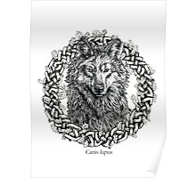Canis Lupus - Gray Wolf - Black & White Version Poster