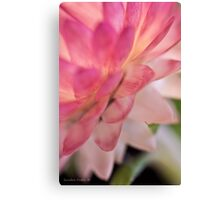 Straw Flower Macro Canvas Print
