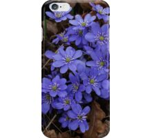 Anemone hepatica iPhone Case/Skin
