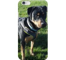 Mutley watches the distance iPhone Case/Skin