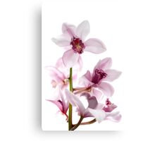 White and pink orchids Canvas Print