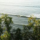 little noosa surfing  by wellman
