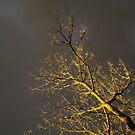 backyard storm by wellman