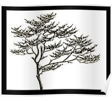 Freehand Pine Poster