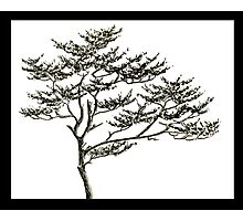 Freehand Pine Photographic Print