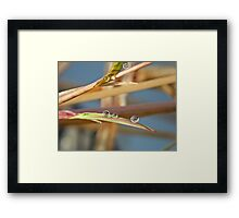 NS Small Worlds I© Framed Print