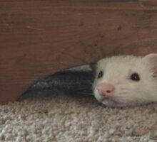 Peeking Ferret Sticker