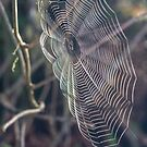 Clear Spider Web by Diego Re
