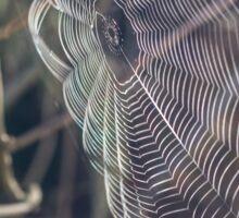 Clear Spider Web Sticker