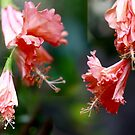 dance of the Hibiscus by lensbaby