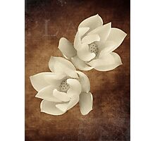 Vintage flowers 3 Photographic Print