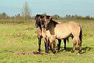 Three Boys - Konik Horse by Jo Nijenhuis