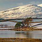 Trawsfynydd Lake by AnnDixon