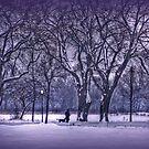 Winter night, silent walk by Luisa Fumi