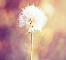 Dandelion Wishes by Linda Lees
