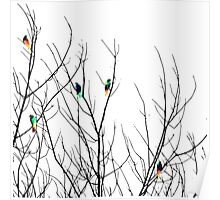 Artistic Bright Birds on Tree Branches Poster