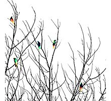 Artistic Bright Birds on Tree Branches Photographic Print
