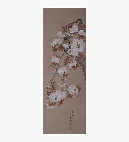 Hirose Kain - Cherry Blossoms . Japanese Still Life  Photographic Print
