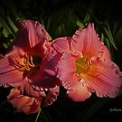 Pink Lily by Rosemary Sobiera