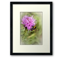 Summer time bumble-bee Framed Print