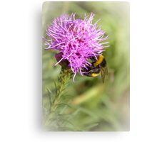 Summer time bumble-bee Canvas Print