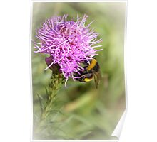 Summer time bumble-bee Poster