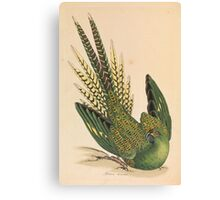 James Sowerby - Ground Parrot  Canvas Print