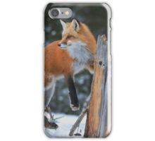 Red Fox On Stump iPhone Case/Skin