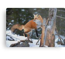 Red Fox On Stump Metal Print