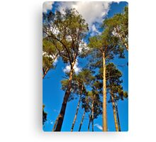 Whispering Pines Canvas Print