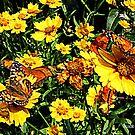 Orange Butterflies on Yellow Coreopsis by Susan Savad