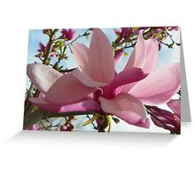 Floral - Japanese Magnolia Macro - Garden Flower Greeting Card