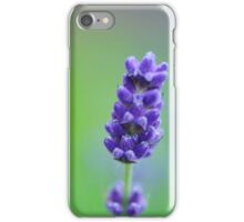 Lavender in green iPhone Case/Skin