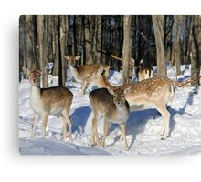 Deer Me...there are so many of us. Canvas Print
