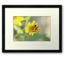 Hanging onto the Yellow Framed Print
