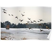 Sywell Country Park in winter time Poster