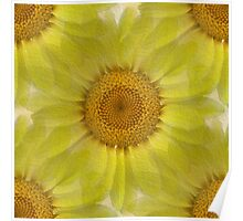 Sunny Day Daisy Floral Abstract Poster