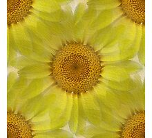 Sunny Day Daisy Floral Abstract Photographic Print