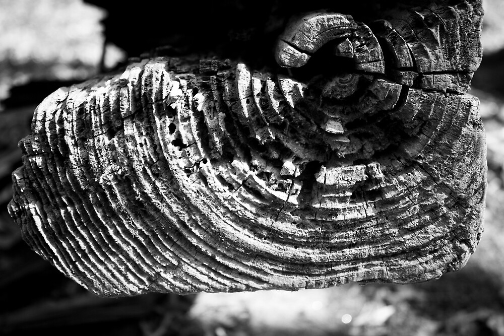 BnW Log Close Up : 2 by Christopher Boscia