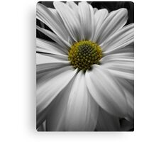White Macro Daisy1 Canvas Print