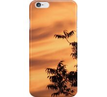 Tropical tree branches at sunset iPhone Case/Skin