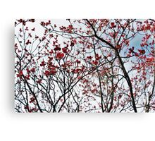 Sky Blossoms  Canvas Print